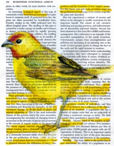 Birds on found paper by Paula Swisher