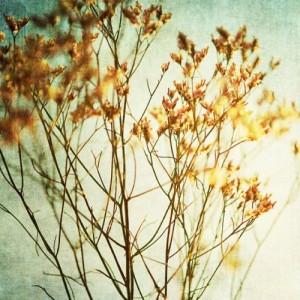 Montara Creek Printed photo art. California, USA