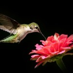 Fine art nature photographer Christina Rollo