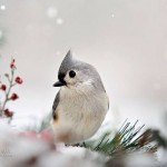 Fine art nature photographer Christina Rollo