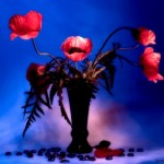 Red poppies. Still life photo by Vasily Cheshenov
