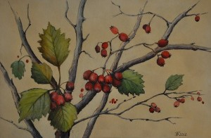 Hawthorn. Painting by Moscow based Elina Forget-me-not