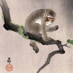 Reborn monkey Chita Bindi