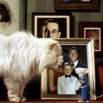 White cat and Stuart Little, 1999