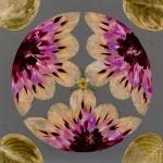 Dried flower collage art by Lyudmila Solod