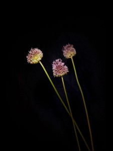 Sarah Illenberger flowerwork project