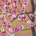 Korean flower painter Sookja Rho