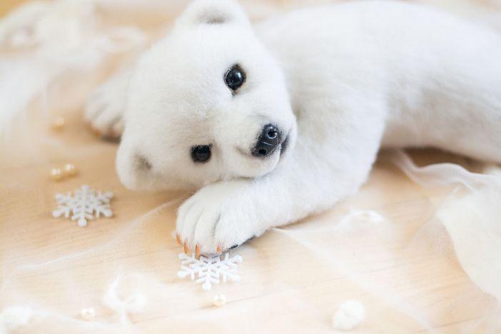 White bear cub Momo