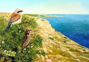 Painting by Italian self-taught artist naturalist Floriano Buccigrossi