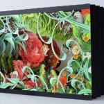 Biology, Botany and Anatomy art by Juan Gatti