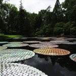 The giant leaves of the CDs look great on the surface of the water and look like lily pads
