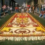 Birds of paradise Sand Carpet