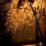 At sunset. Still life photo art by Svoboda