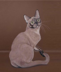 Short-hair Cat. Painting by Russian artist Maria Emelyanova