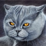 Yellow-eyed British Cat. Painting by Russian artist Maria Emelyanova