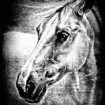 Horse head. Black and white drawing by Salim Ljuma