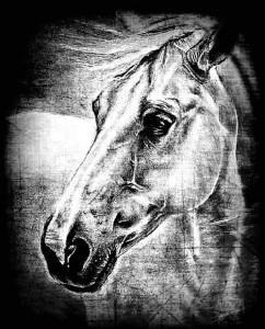 Horse head. Black and white drawing by Salim Ljuma