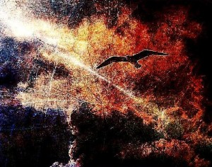 Flying in the night sky black bird. Graphic art by Salim Ljuma