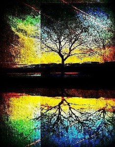 Colors and shadows. Lonely tree