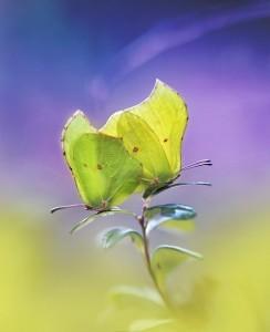 Series 'Butterflies'. Photographer P. Laura, Minsk, Belarus