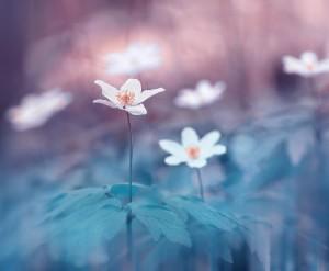 Series 'Flowering time'. Photographer P. Laura, Minsk, Belarus