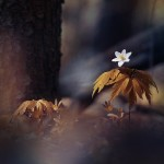Series 'Flowering time'. Photographer P. Laura, Minsk, Belarus