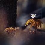 Photo art by P.Laura