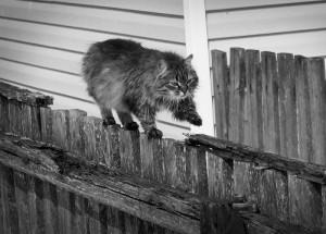 The series 'Cats'. Photographer P. Laura, Minsk, Belarus