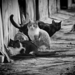 The series 'Cats'. Photographer P. Laura, Minsk, Belarus