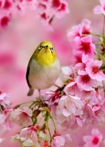 photographer Sue Hsu