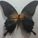 Hasan Kale creates incredibly intricate miniature paintings on butterfly wings