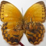 Detailed micro painting of Istanbul on butterfly wings. Turkish artist Hasan Kale