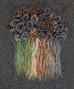 photo project Green arrangement