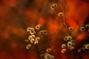 Scarlet landscap