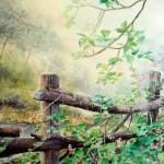 Overgrown Fence