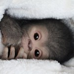 Made by Russian artist Ekaterina Samgina monkey looks highly realistic