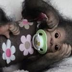 Monkey doll, handmade by Russian artist Ekaterina Samgina
