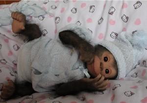 Incredibly realistic doll – Chita Bindi baby monkey doll by Ekaterina Samgina