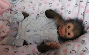 Chita Bindi baby monkey doll by Ekaterina Samgina