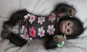 Truly masterpiece – Chita Bindi baby monkey doll by Ekaterina Samgina