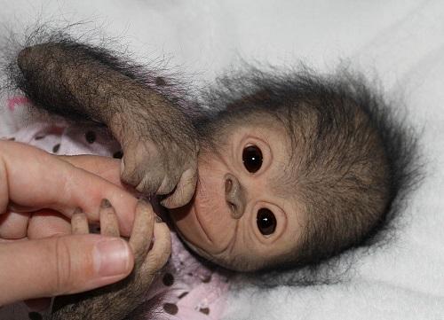 Reborn Monkey Chita Bindi Art Kaleidoscope