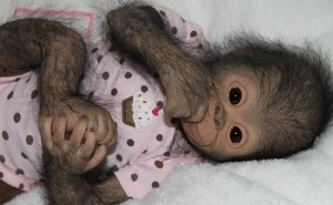 Handmade Realistic baby monkey Chita Bindi made by Ekaterina Samgina