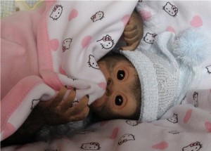 Realistic Reborn monkey Chita Bindi made by Ekaterina Samgina