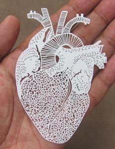 An anatomical Heart