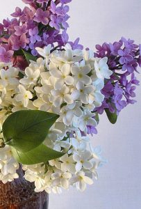 A detail of Lilac Bouquet