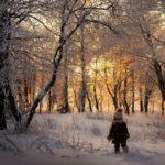 Forest dream by Nelleke Pieters