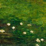 Buttercups - a symbol of ingratitude or infantilism