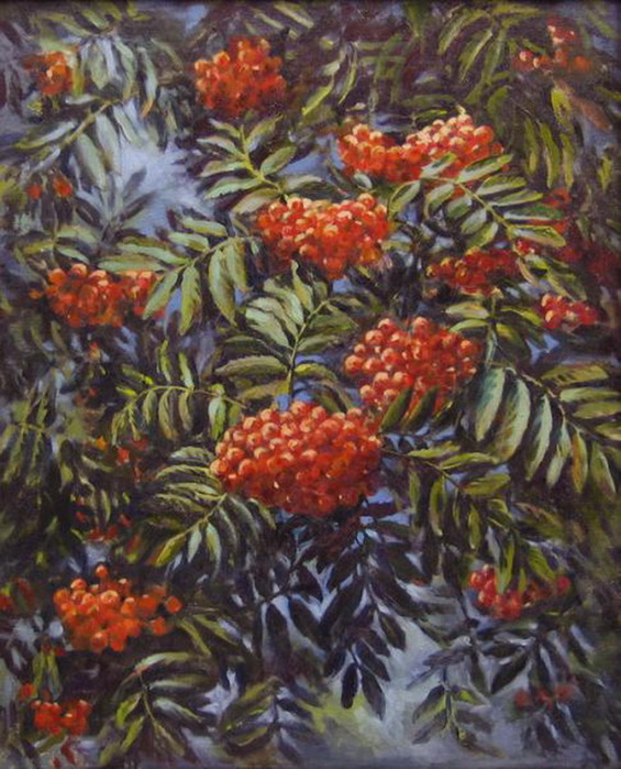 Mountain ash. A.S. Vymorokova