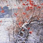 Vasily Nesterenko. Red Rowan in the snow