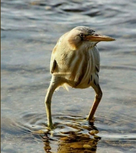 A bird standing in the water, photo